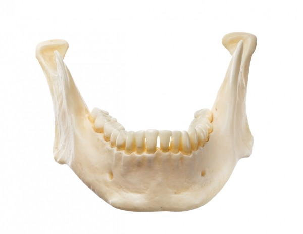 Mandible