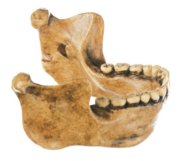 Lower Jaw from Mauer near Heidelberg, Homo heidelbergensis