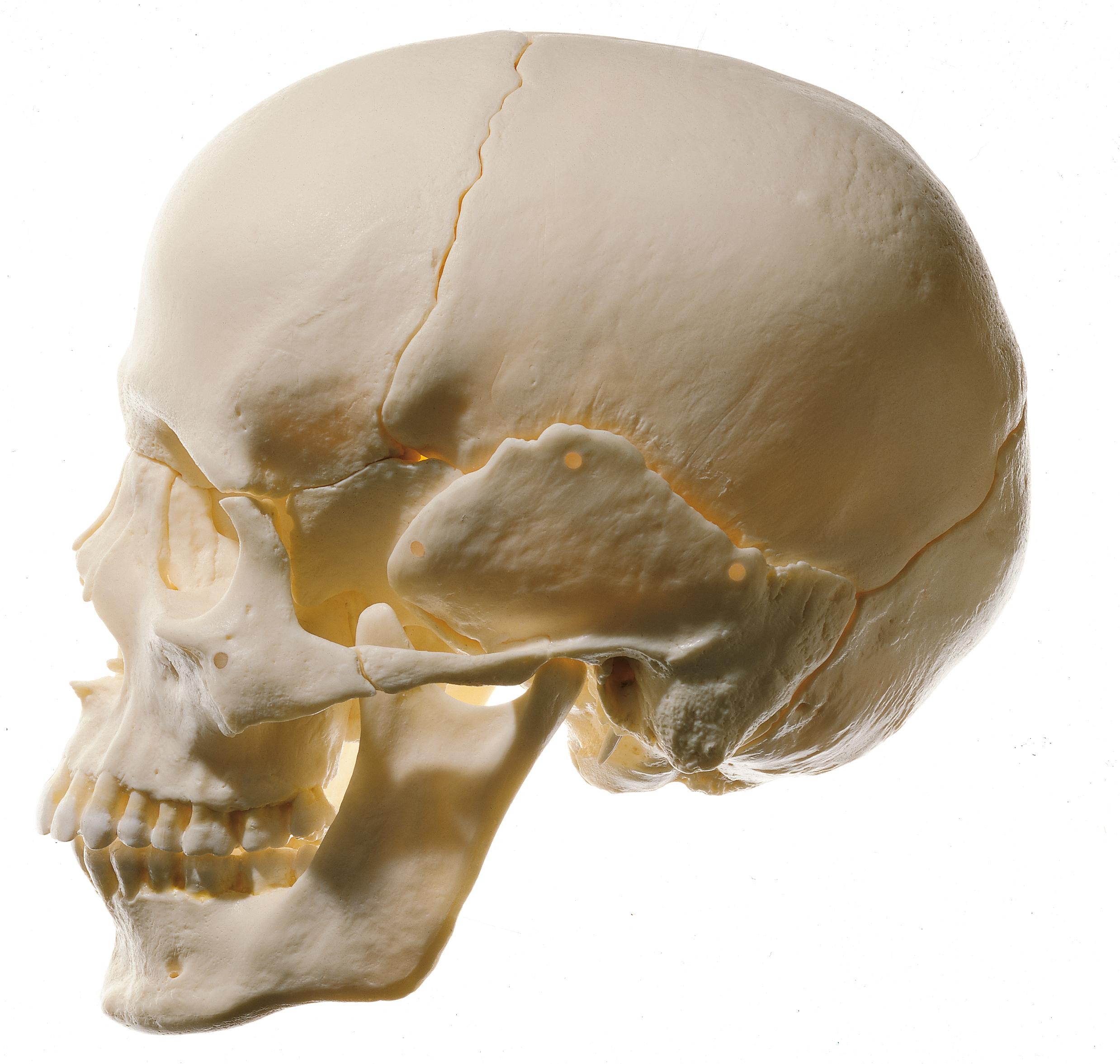 утро формы норм черепа человека фото печатающая головка распыляет